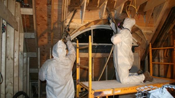 Mold Removal Company